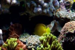triunghiul coralilor