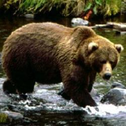 urs salvat din apa