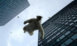ursi polari cazand