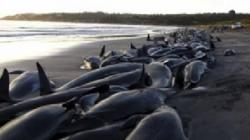 balene esuate