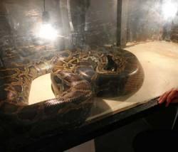 expozitie reptile