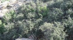 palc de stejari