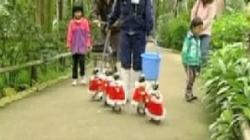 pinguini pregatiti