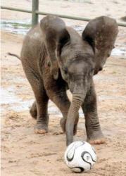 poze-cu-elefanti