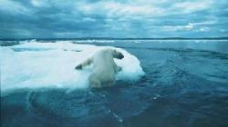 un urs polar
