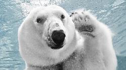 urs polar saluta