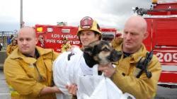 Catelul Vernon salvat de pompieri