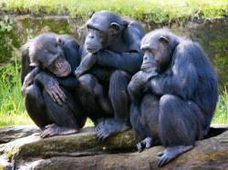 film cu cimpanzei