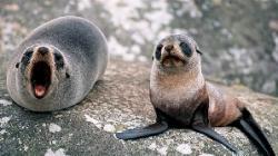 foci blanoase