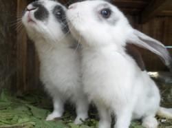 Terapii asistate de... iepuri
