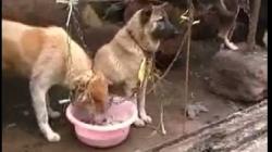 interzice consumul de caini si pisici