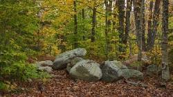 inventar forestier