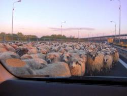 cu oile pe Autostrada Soarelui
