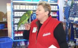 papagalul Lilo