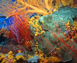 recif corali
