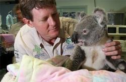 urs Koala spitalizat