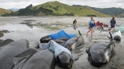balene moarte