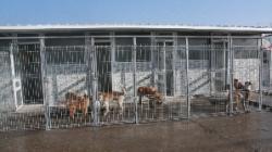 cainii din sectorul 1