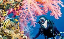 Umbrele de soare pentru corali: Ultima şansă pentru salvarea recifelor din oceane