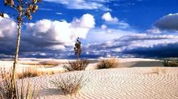 desertificare