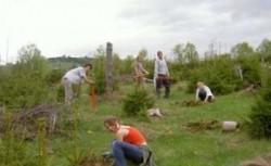 Peste 180 de hectare de teren au fost impadurite in Maramures