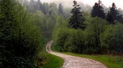 Cooperarea in domeniul silviculturii intre Romania si Serbia