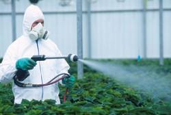 Cum influen?eaz? memoria cele mai utilizate pesticide din lume?
