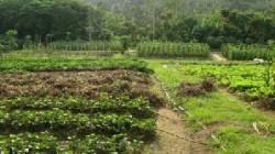 Cea mai noua tehnologie de fertilizare in legumicultura, fertilizarea cu CO2.