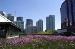 toronto-green-roof.jpg