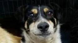 Anchet? la ad?postul de câini din Oradea, dup? ce pe internet au ap?rut imagini cu animale brutalizate