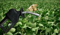Lovitura de mediu: Biocombustibilul nu e chiar asa de bio