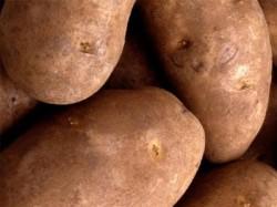 Cartofii mari, pericol pentru sanatate. Bombe alimentare pline cu nitriti si nitrati