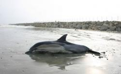 delfin esuat