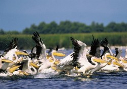 delta-dunarii-pelicani.jpg