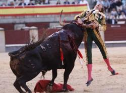 matador si taur