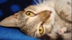 o pisica a nascut