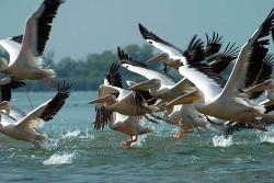 """Romfilatelia pune în vânzare """"Păsările acvatice"""" - misiune a Convenției Ramsar asupra Zonelor Umede"""