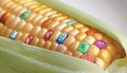Produsele modificate genetic ar putea sa contina obligatoriu o eticheta care sa informeze consumatorii