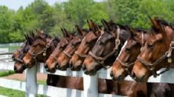 Romsilva si caii
