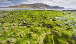 seaweed-540x380.jpg
