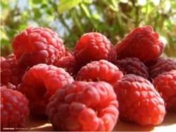 Zmeura, un fruct aromat si sanatos: Tine cancerul la distanta si previne imbatranirea