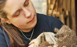aricii animale de companie