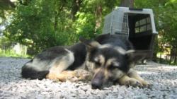 Asociatiile de protectia animalelor