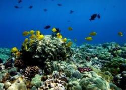 Biosfera microbiana oceanica