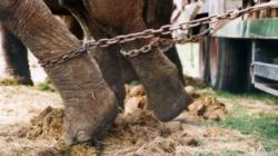 circ fara animale