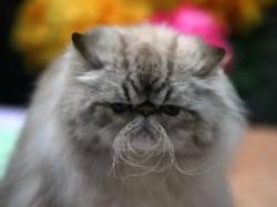 concurs de feline