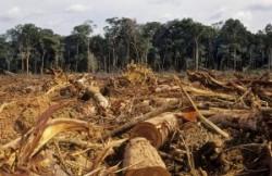 Bucureşti: Colaborare pentru refacerea suprafeţelor despădurite