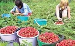 Flavonoidele din legume ?i fructe protejeaz? fum?torii de cancer