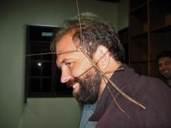 insecta lunga