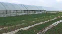 legume si solarii